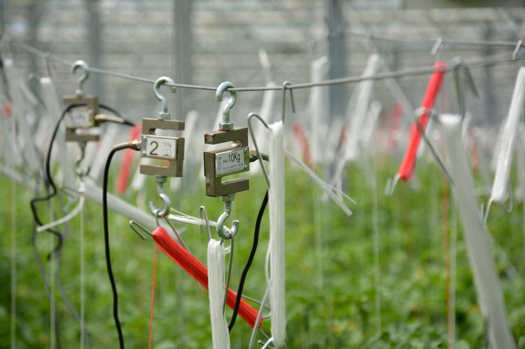 data sensors of Trutina in a tomato greenhouse