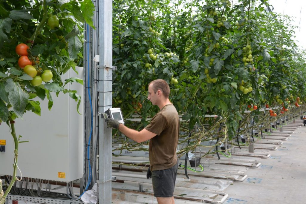 data collection of crop production at a tomato farm