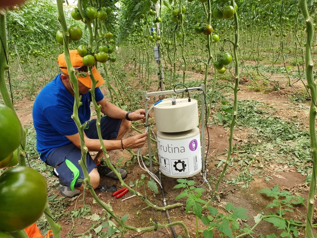 Trutina irrigation system implementation on a tomato farm